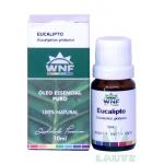 Óleo Essencial de Eucalipto (Eucaliptus globulus)