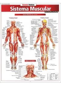 Resumão Sistema Muscularog:image
