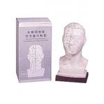 Modelo da  face com pontos acupunturais
