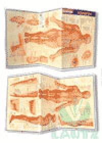 Resumão Acupuntura-Meridianos e Vasos, Linhas e Pontosog:image