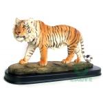 Tigre Mini Asiático