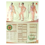 Mapa Os 14 Meridianos Principais da Medicina Chinesa