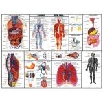 Mapa Corpo Humano