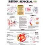 Mapa Sistema Sensorial