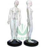 Modelo de corpo humano - Feminino