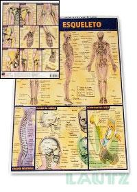 Resumão Esqueletoog:image