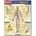 Resumão Sistema Nervoso