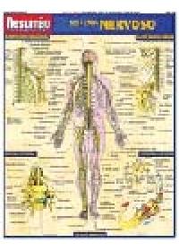 Resumão Sistema Nervosoog:image